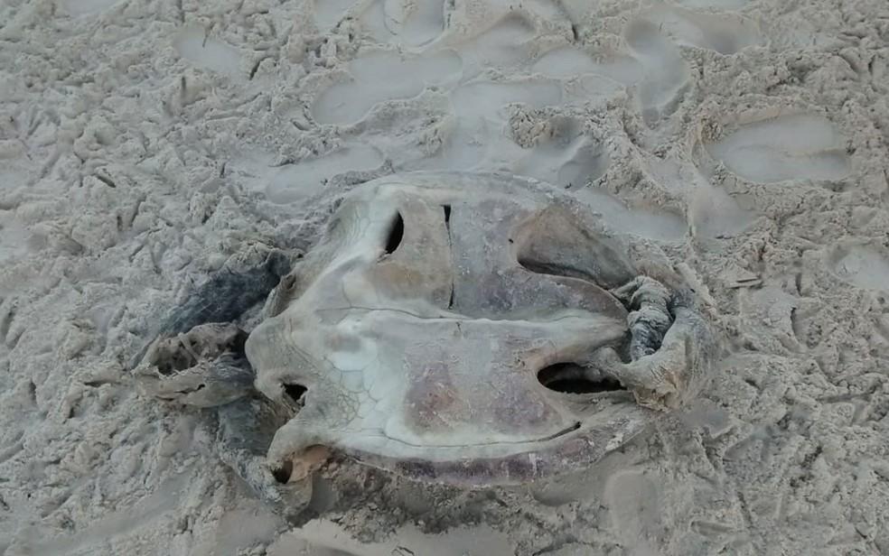 Integrantes do projeto identificaram que tartaruga achada em Uruçuca foi perfurada na Bahia — Foto: Divulgação/Projeto A-Mar
