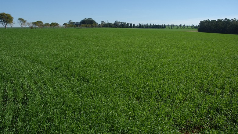 campo-agronegocio-interior-agro-lavoura-fazenda (Foto: Ernesto de Souza/ Ed. Globo)