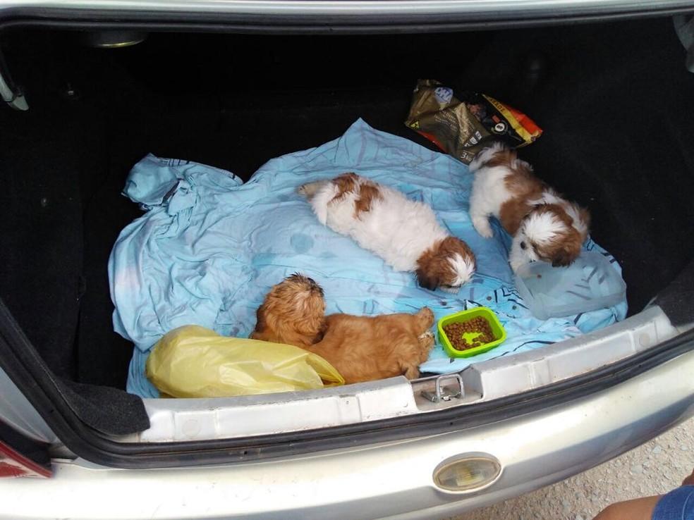 Filhotes da raça Shih-tzu à venda em porta-malas de veículo, no Distrito Federal (Foto: Polícia Militar/Crédito)