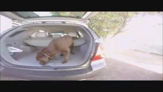 Homem é preso em Campo Erê com 52 kg de crack em fundo falso de carro; veja vídeo