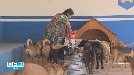 Abrigos de cães e gatos pedem ajuda no DF