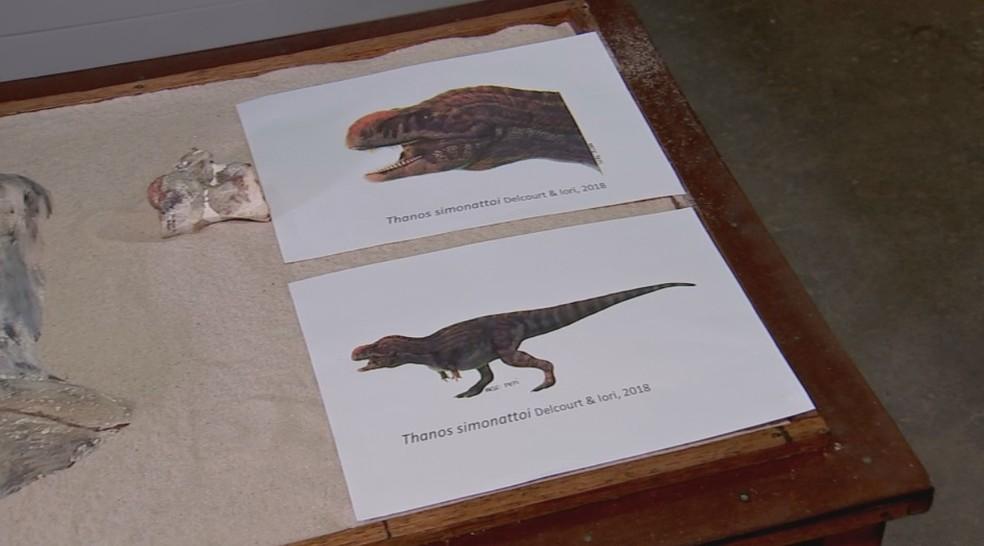 Reprodução de como seria o Thanos e  fóssil encontrado dele — Foto: Reprodução/TV TEM