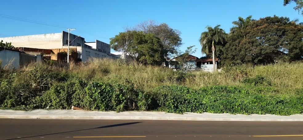 Prefeitura de Rio Preto intensifica fiscalização em terrenos para evitar queimadas— Foto: Divulgação/Prefeitura de Rio Preto