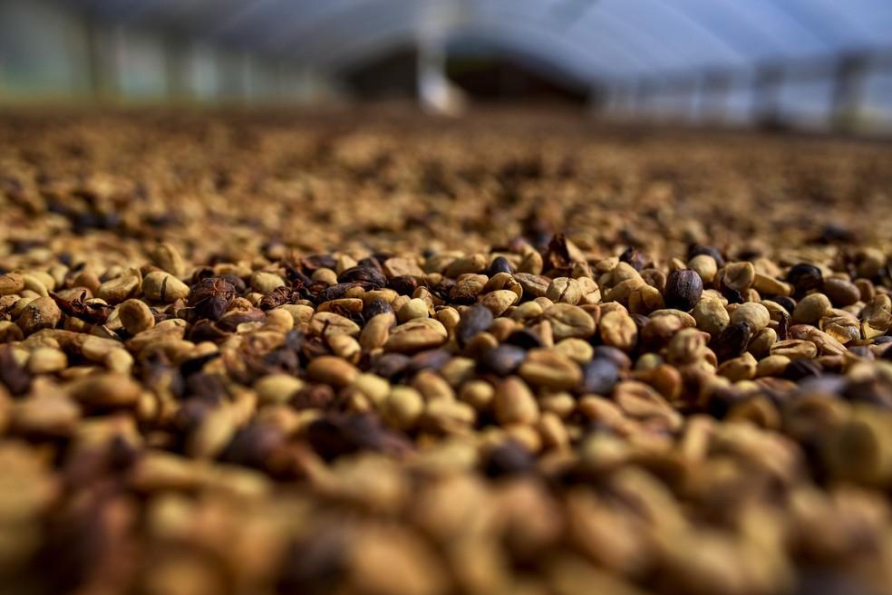 Cotações do café arábica no mercado internacional atingiram mínimas de mais de 12 anos em meados de setembro — Foto: Vinícius Gonçalves/ TV Gazeta