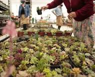 A maior floricultura do Brasil é inaugurada em Curitiba