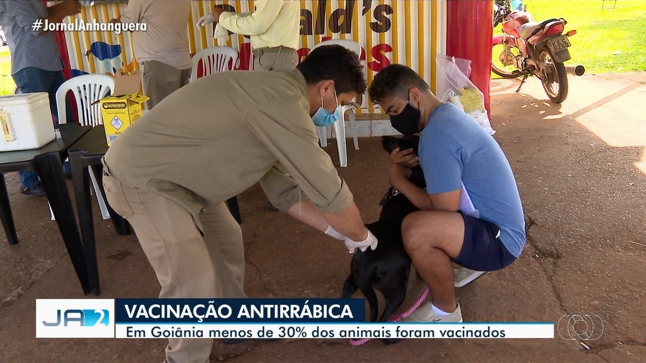 Menos de 30% dos animais foram vacinados com a antirrábica em Goiânia