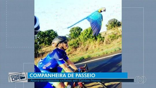 Arara voa perto de grupo de ciclistas em rodovia de Caldas Novas; vídeo