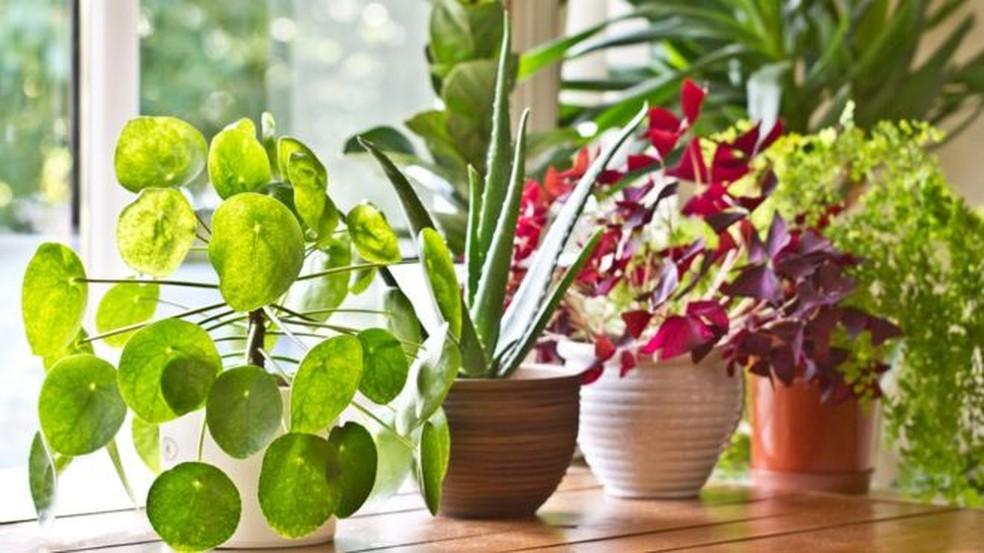 As plantas são silenciosas? Um novo estudo diz que não - apenas não conseguimos ouvir seus sons — Foto: Getty Images via BBC