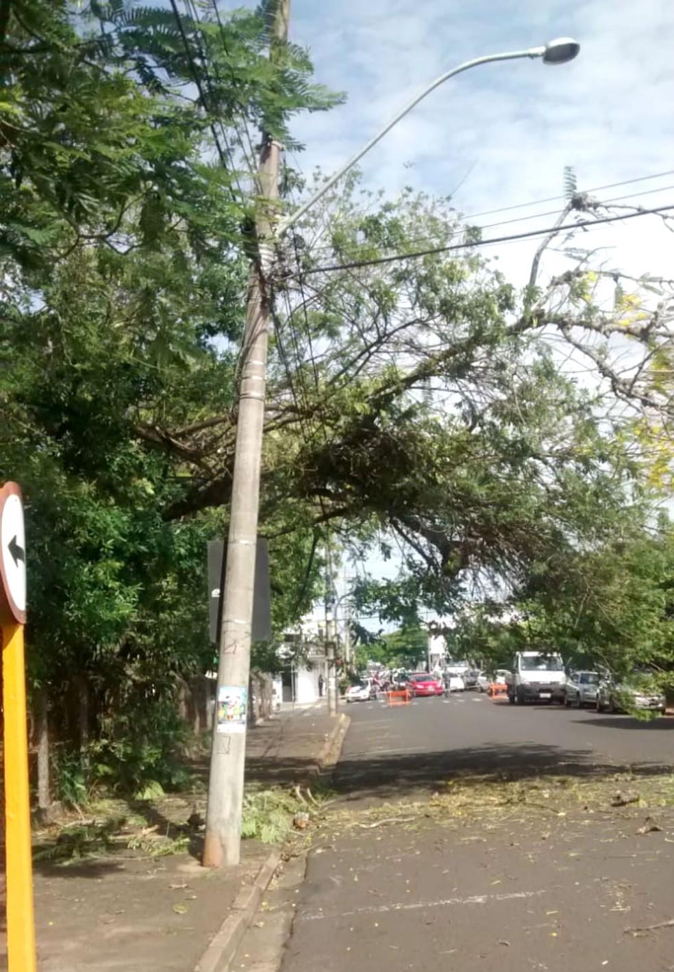 """Árvore que caiu no Bosque da Comunidade ficou """"escorada"""" em fios da rede elétrica — Foto: Prefeitura de Bauru/Divulgação"""
