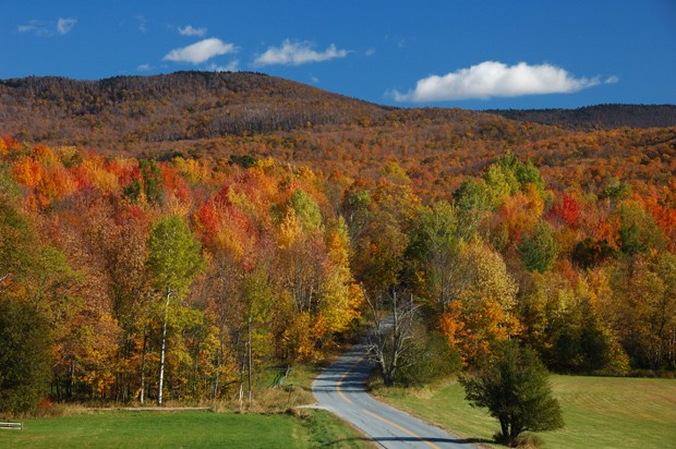 Vermont forest (Foto: Getty Images/iStockphoto)