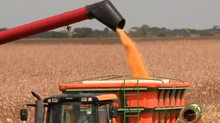 Ministério reduz previsão para valor bruto da produção agropecuária de 2019 - Notícias - Plantão Diário