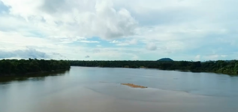 Projeto Quelônios do Guaporé chegou aos 21 anos com um nascimento recorde de  filhotes em RO — Foto: Reprodução/Rede Amazônica