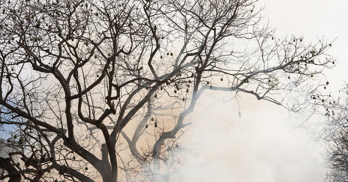 Fumaça e tempo seco pioram qualidade do ar e podem agravar doenças respiratórias