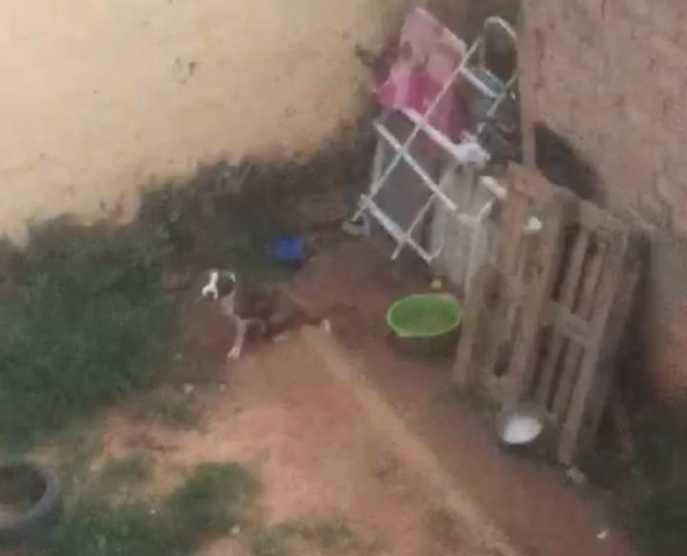 Cachorro foi deixado na chuva e sol no quintal de casa — Foto: Arquivo pessoal