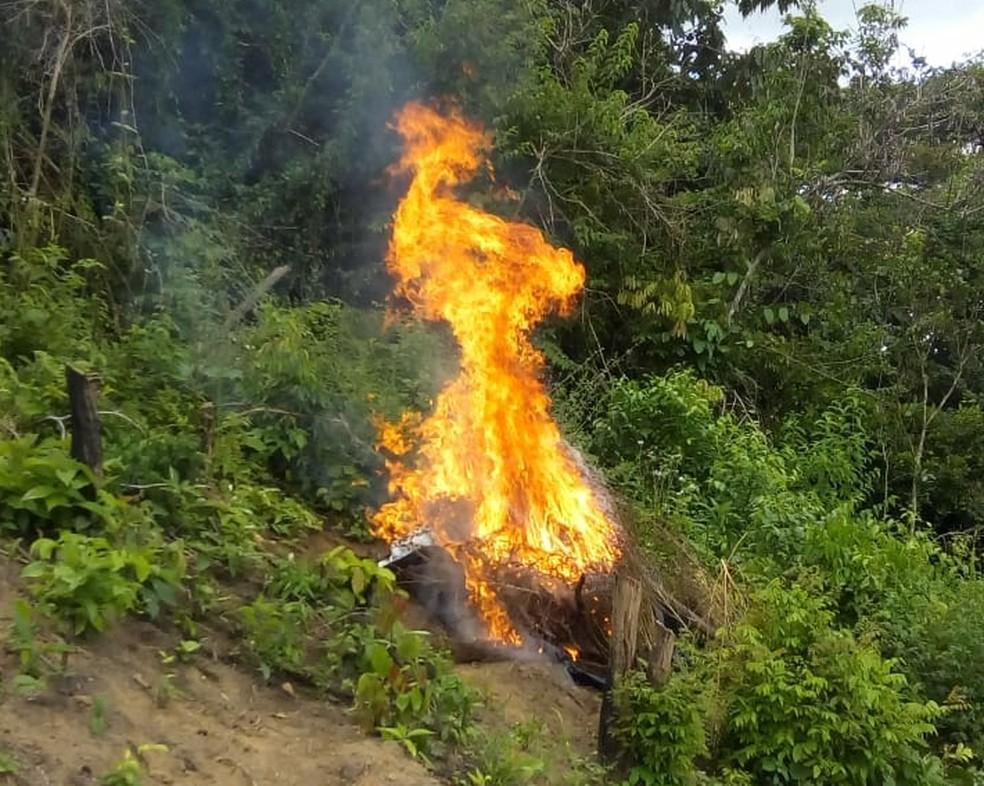 De acordo com a polícia, droga encontrada no povoado Faisa foi incinerado (Foto: Divulgação/Polícia Civil)