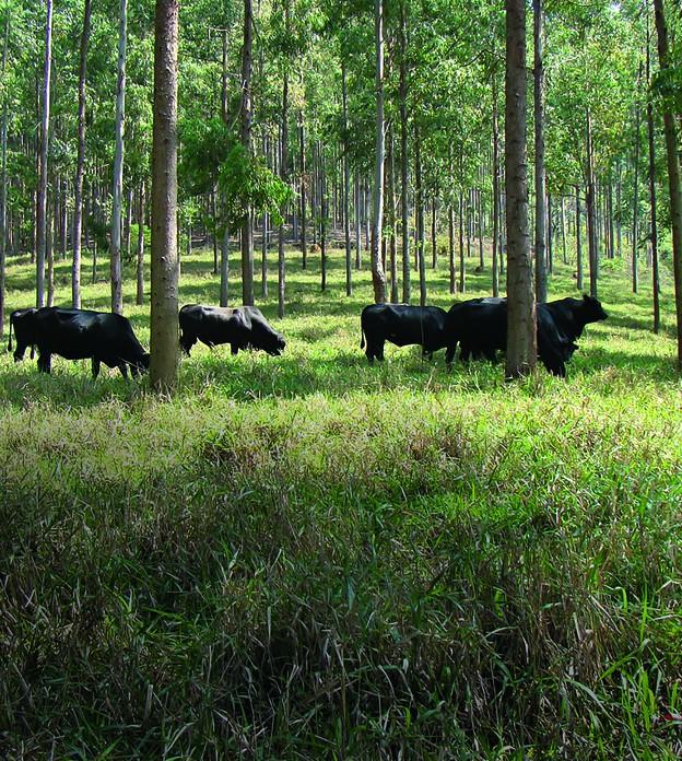 Conheça a fazenda brasileira que entrou para a lista das 28 mais sustentáveis do mundo