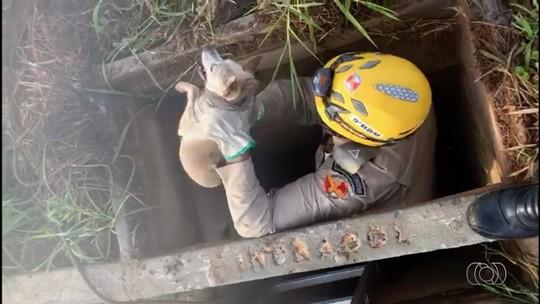 Bombeiros resgatam cachorro que caiu dentro de bueiro de 5 metros de profundidade em Caldas Novas