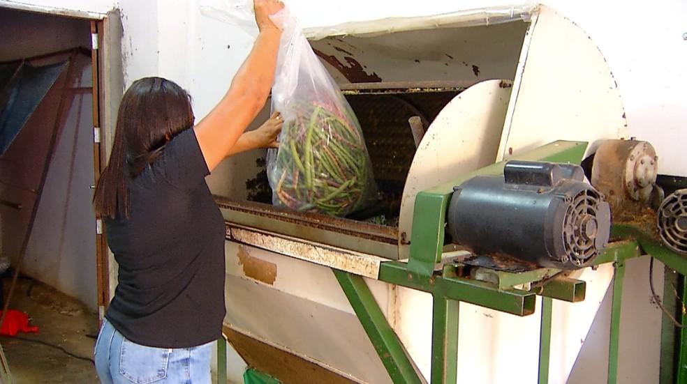 Máquina que debulha o feijão verde produzido em Baraúna, na região Oeste do Rio Grande do Norte. — Foto: Inter TV Costa Branca