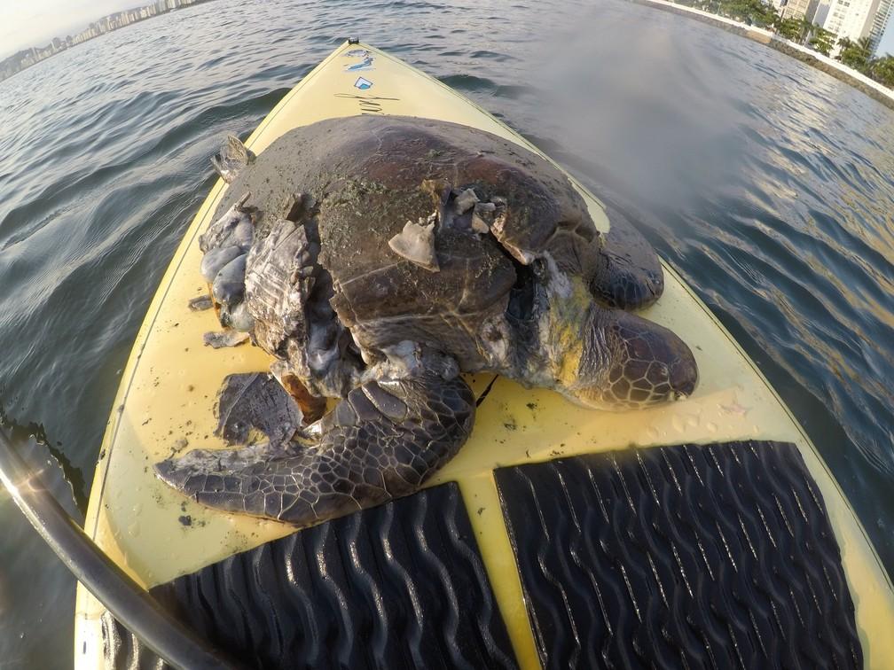 Tartaruga-verde chegou a ser recolhida do mar, em Santos (SP), mas não resistiu aos ferimentos — Foto: Valdir Gomes/Arquivo Pessoal