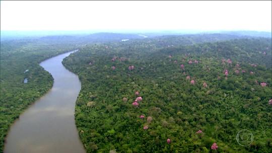 Países que injetam verba no Fundo Amazônia são contra mudanças