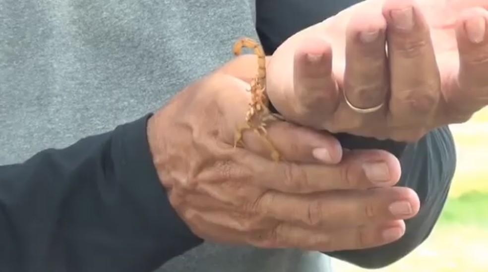 Em serra Talhada, no Sertão, homem postava imagens na internet manipulando animais, como escorpiões e cobras (Foto: Reprodução/Facebook)