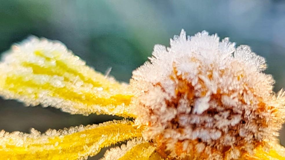 Vale do Caminhos da Neve, em São Joaquim, nesta manhã — Foto: Mycchel Legnaghi/São Joaquim Online