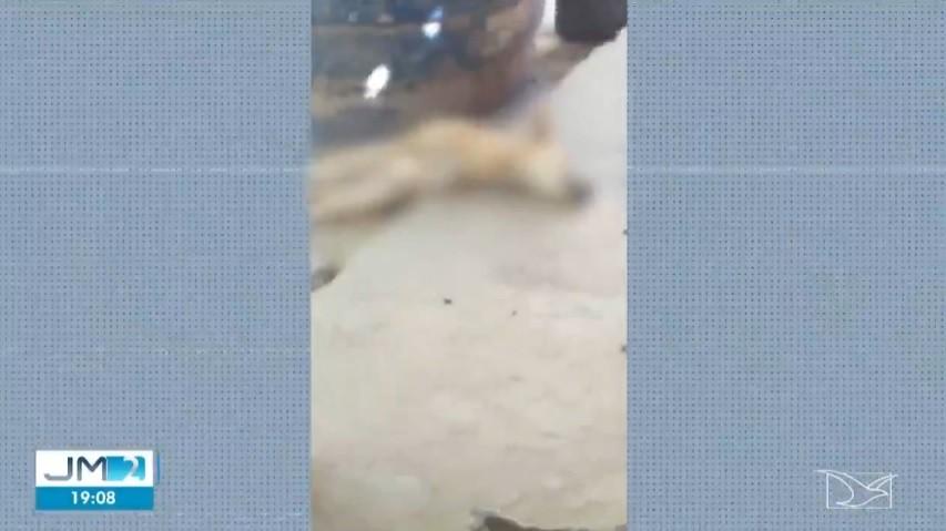 Cães são envenenados dentro de comunidade quilombola no MA