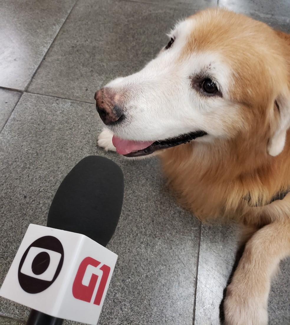 Prince, cão de suporte emocional, 'em entrevista' para o G1 — Foto: Eduardo Pierre/G1