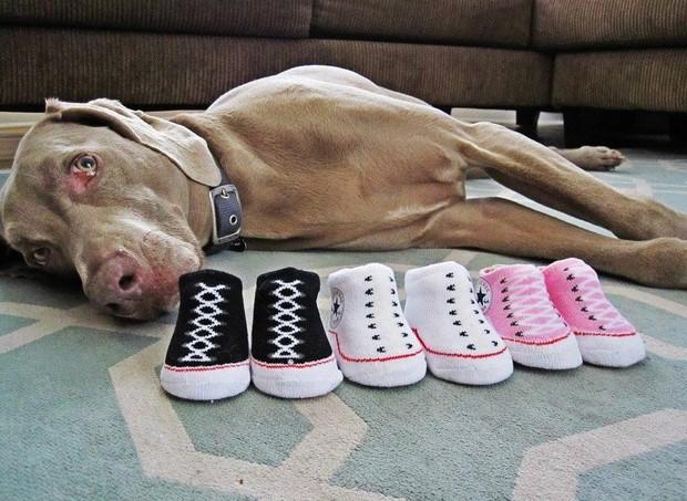 A família começou a estocar objetos para os bebês, assim que recebeu a notícia: tudo em dose tripla, como os tênis (Foto: Reprodução/ Facebook)