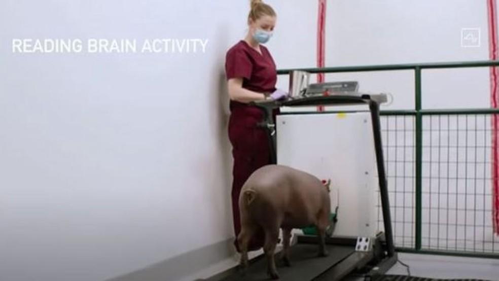 Os testes mais recentes do dispositivo foram feitos em porcos — Foto: Neuralink