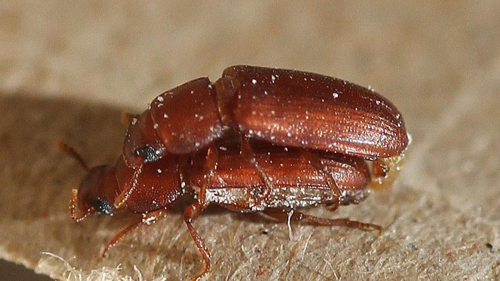 A curiosa razão pela qual há insetos homossexuais