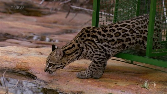Programa mostra o novo Parque Nacional Boqueirão da Onça