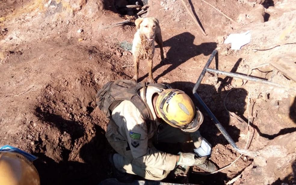 Bombeiro e cão goiano ajudam nas buscas às vítimas de Brumadinho — Foto: Divulgação/ Corpo de Bombeiros