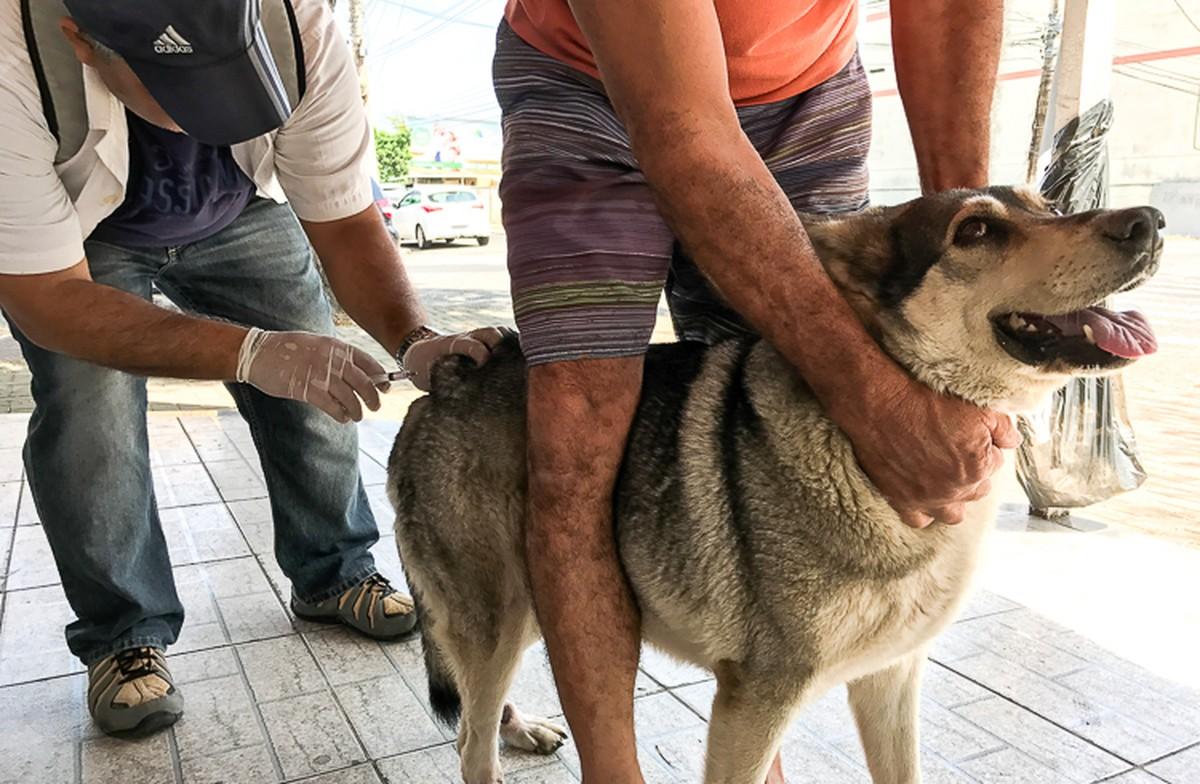 Mais de 350 mil cães e 115 mil gatos são vacinados contra raiva na PB, diz Secretaria