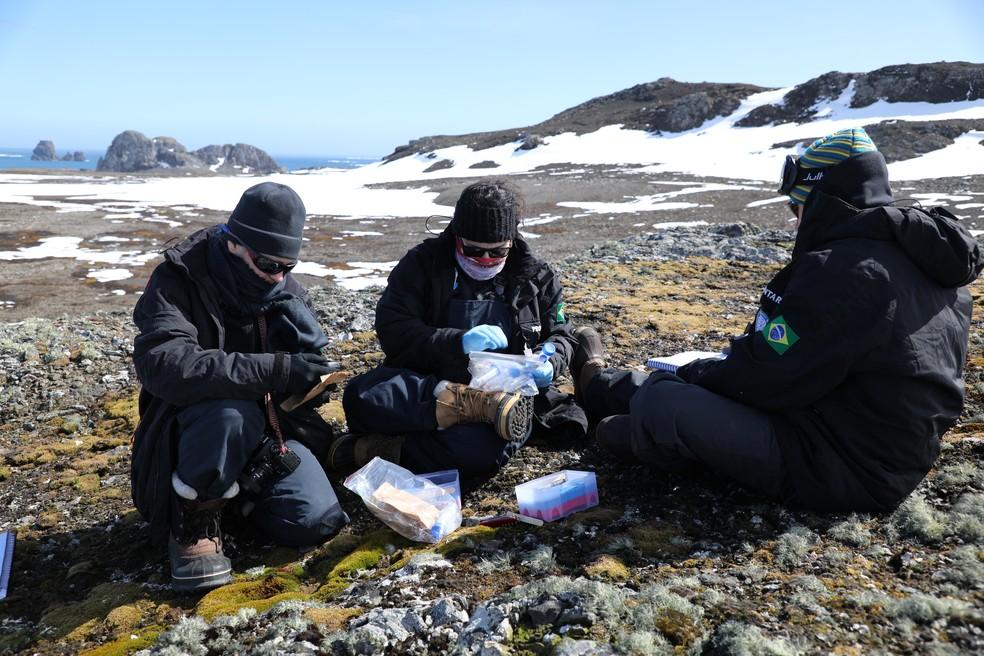 O Brasil na Antártica: veja quais são as pesquisas desenvolvidas na Estação  Comandante Ferraz | Ciência e Saúde | G1