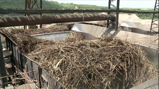 Setor de cana se recupera em AL depois de registrar pior safra da história devido à seca