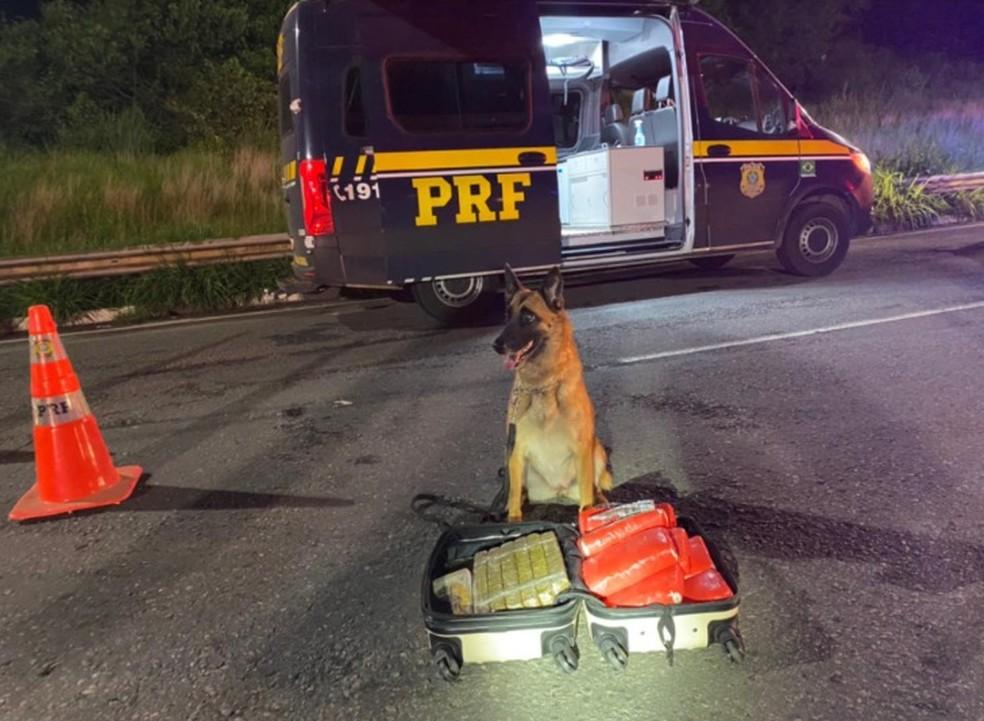 Mulher é presa após cães farejadores encontrarem mais de 11 kg de drogas em ônibus na BR-324 — Foto: Divulgação / PRF