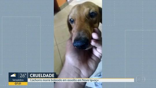 Bandidos matam cachorro em assalto no RJ