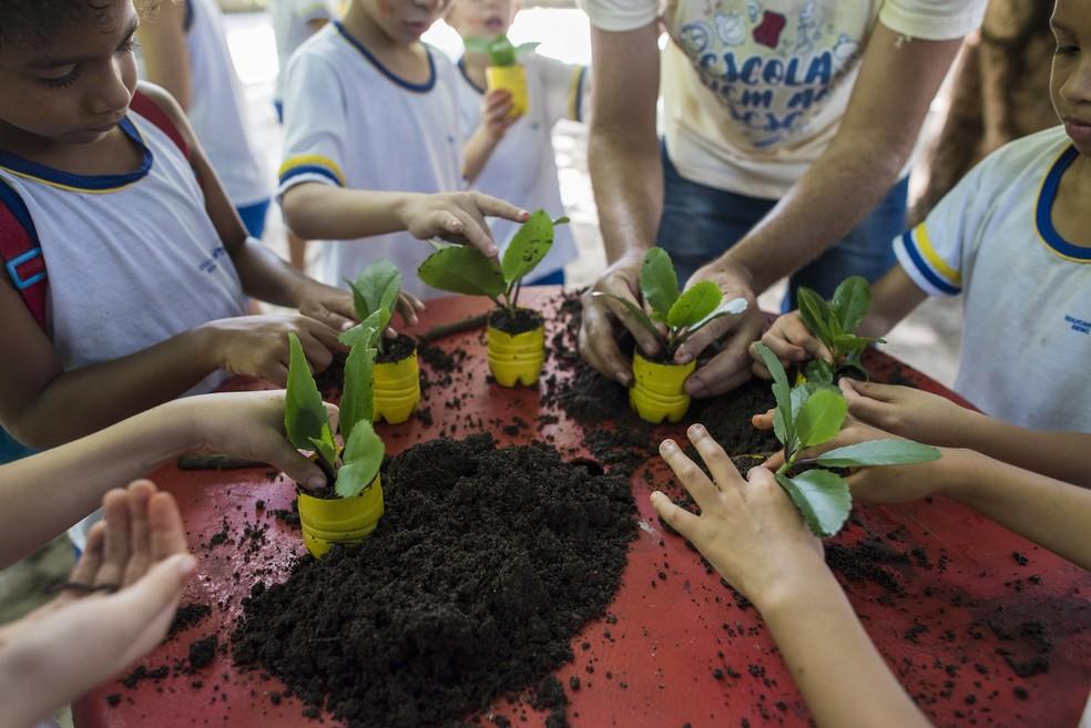 Além de melhorar o desenvolvimento das crianças, conhecer a fauna e a flora de perto é uma forma de incentivar o cuidado com o meio ambiente — Foto: Viktor Braga