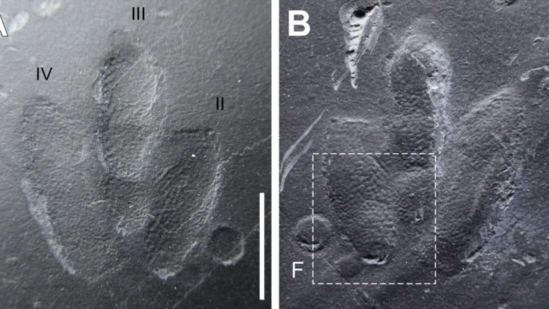 Pegada com vestígio de pele de dinossauro (Foto: Exquisitely-preserved, high-definition skin traces in diminutive theropod tracks from the Cretaceous of Korea)