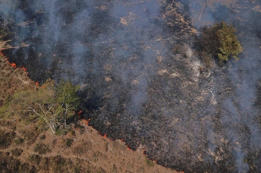 Fogo queima árvores e vegetação no Pantanal em Poconé, Mato Grosso, no dia 30 de agosto. — Foto: Amanda Perobelli/Reuters