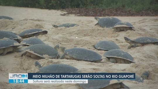 Mais de meio milhão de tartarugas serão soltas neste final de semana no Rio Guaporé, em RO