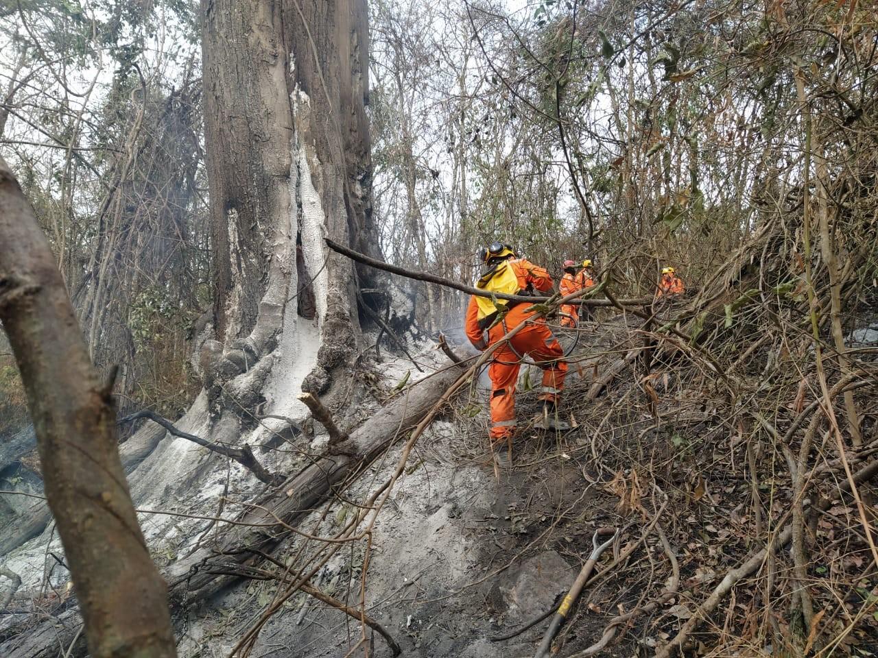 Danos causados por incêndio no Parque do Pau Furado em Uberlândia são avaliados