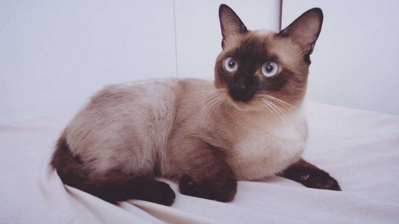 Jovem faz tatuagem para homenagear gato que tinha RG animal e certidão de nascimento: 'Um filho para mim'