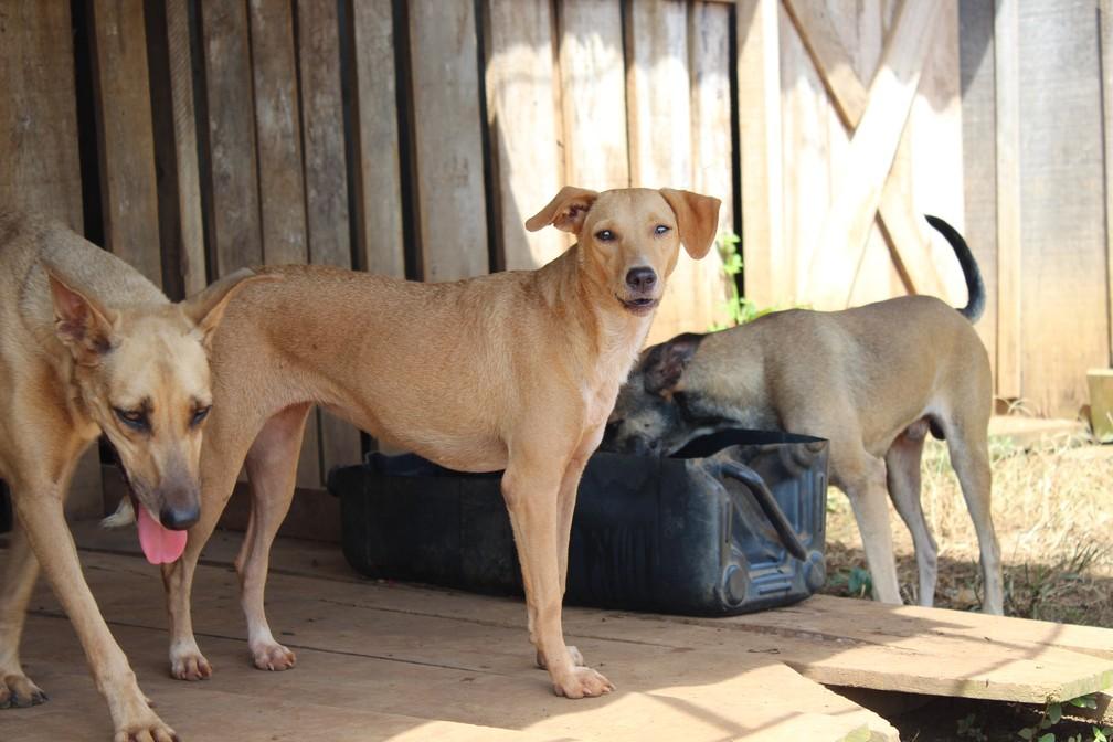 Animais foram resgatados nas ruas, ou abandonados no local — Foto: Cássia Firmino/G1