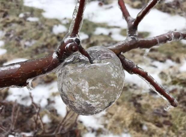 Já imaginou uma maçã dos contos de fada? No Michigan, a própria natureza criou esse fenômeno (Foto: Facebook/ Reprodução)