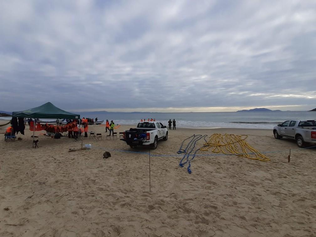 Equipes vão tentar desencalhar baleia quando a maré subir em Florianópolis — Foto: Nilson Coelho/R3Animal