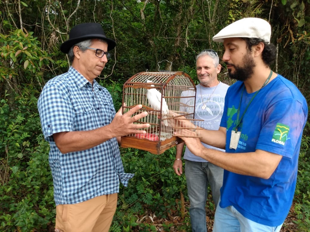 Araponga é devolvida à natureza após dois meses de reabilitação em Florianópolis - Notícias - Plantão Diário
