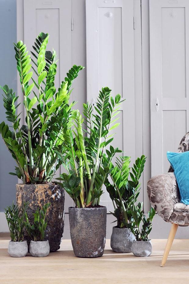 Difíceis de matar: 9 plantas muito fáceis de cuidar (Foto: Reprodução)