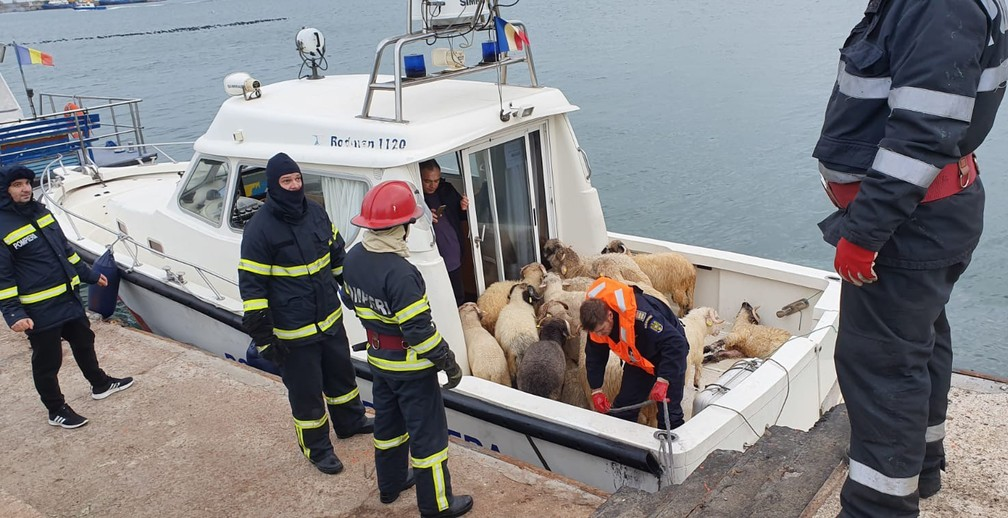 Animais estão sendo retirados do Queen Hind, navio de carga que tombou no Mar Negro — Foto: IGSU Romania / AFP